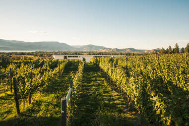 Tantalus Vineyards in the Okanagan Valley, BC