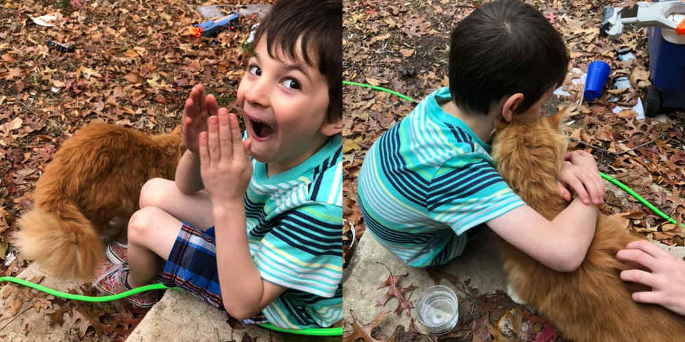 Little Boy Whose Cat Passed Away Is So Excited When New Cat Shows Up At Door