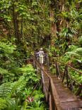 Jacko Steps, Dominica