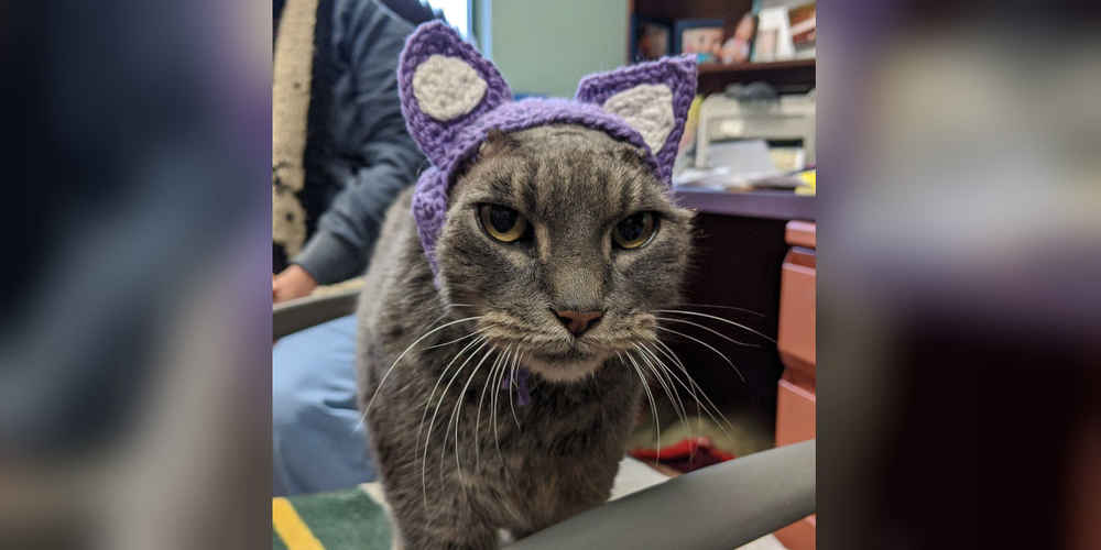 Cat Lost Her Ears — So The Shelter Made Her A New Pair