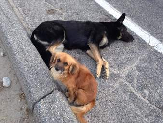 Stray dog protects his friend on the street