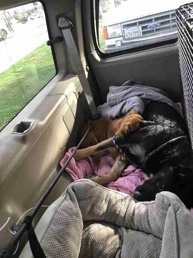 Dog snuggles his friend after being rescued