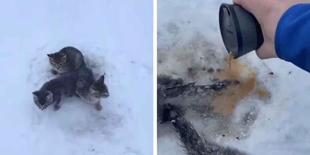 Guy Finds Kittens Frozen To The Ground — And Uses His Coffee To Save Them