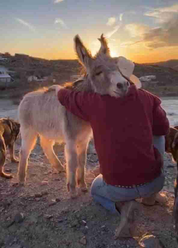 Walter the donkey snuggles up to his dad