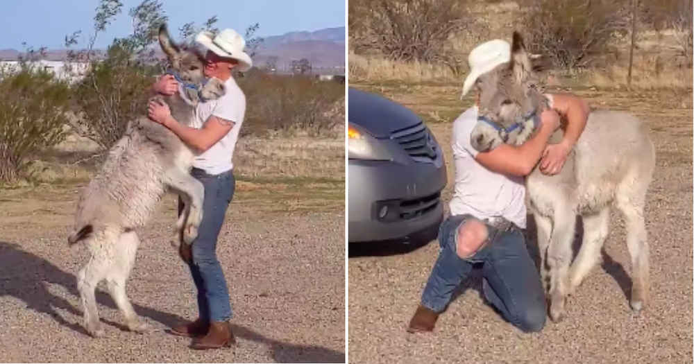 Donkey Acts Just Like A Dog When He Sees His Dad Is Home