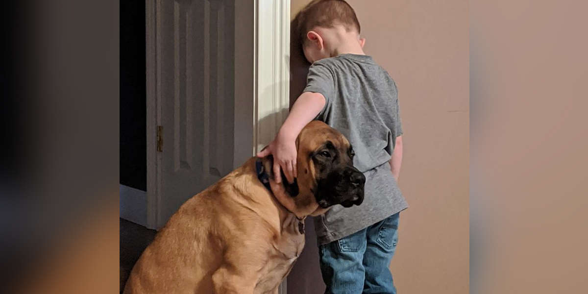 Dog Puts Himself In Time-Out Too So Boy Doesn't Have To Do It Alone