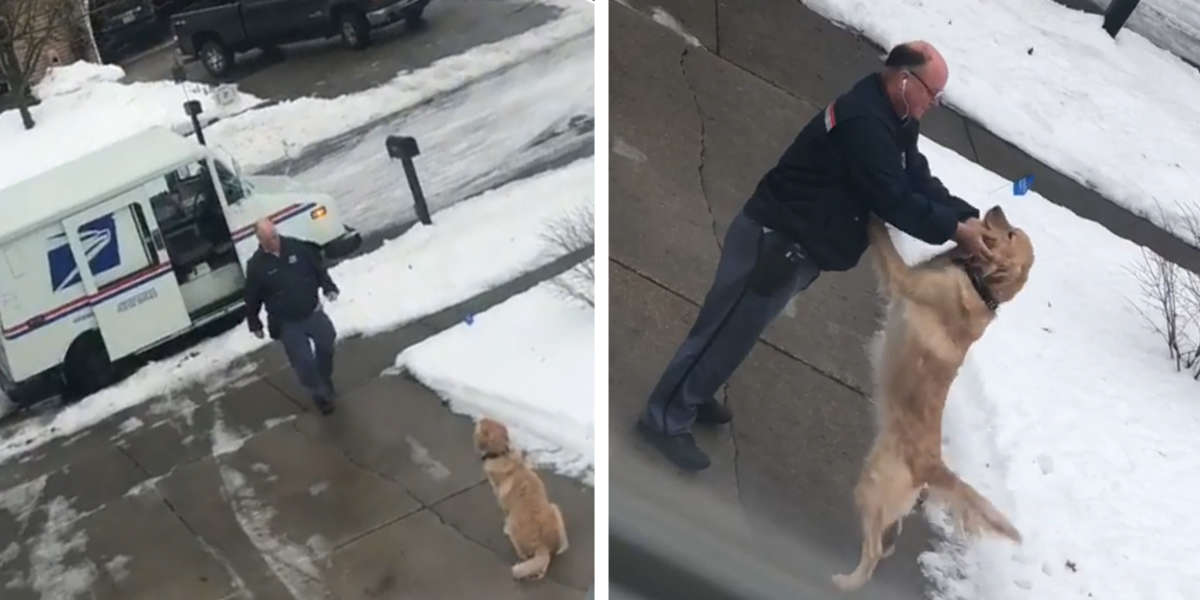 Dog Waits Every Day To Get A Hug From His Favorite Mailman