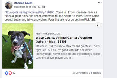 max pit bull joins charity race dunn nc