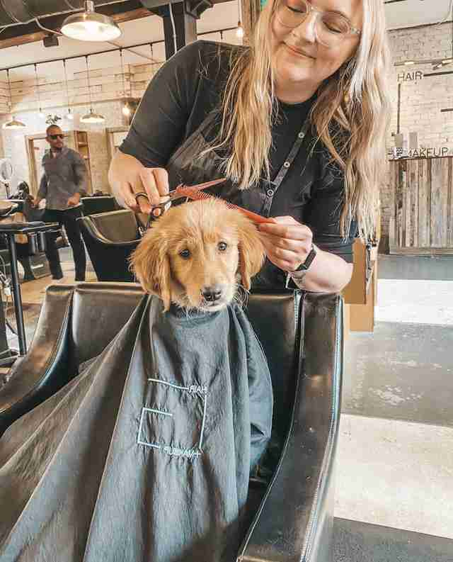 puppy goes to salon