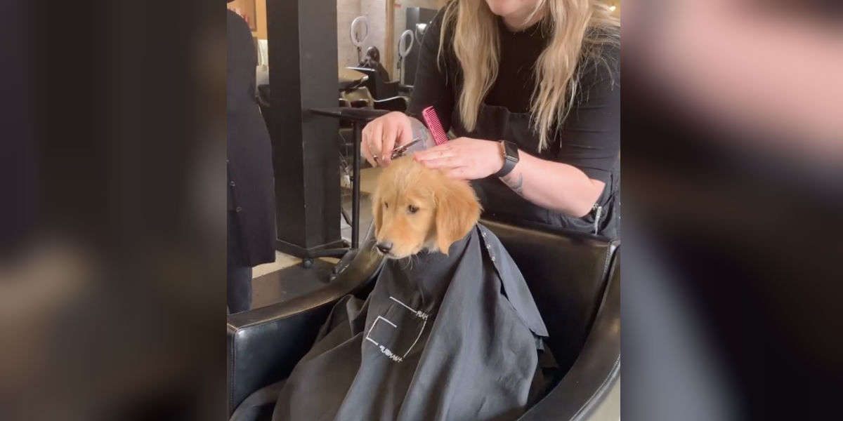 Puppy Goes To Salon And 'Gets His Hair Done' With Mom