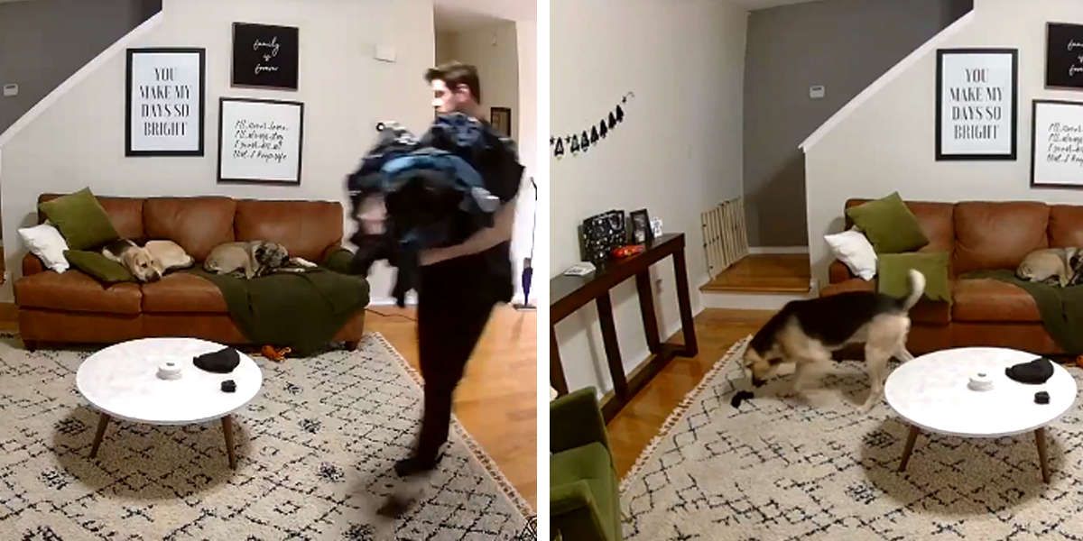 Camera Catches Very Good Dog Helping His Owner With The Laundry