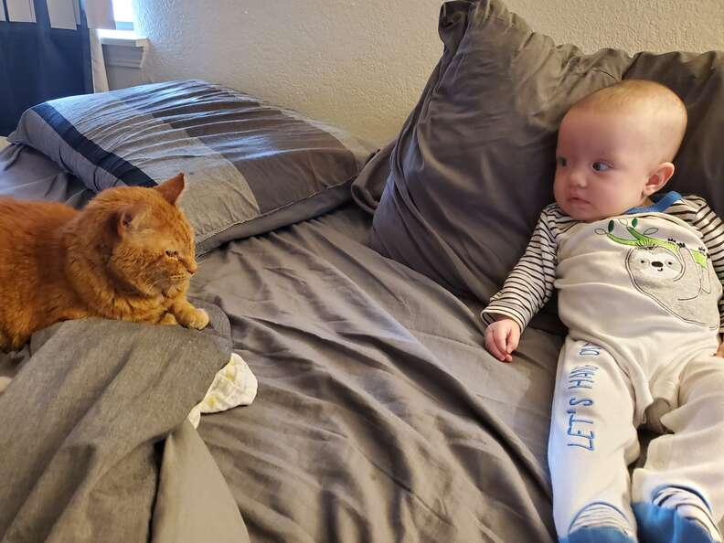 cat naps with baby