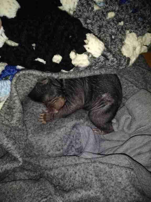 Orphaned black bears found in cardboard box
