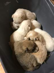 Dog and her puppies found in snow bank