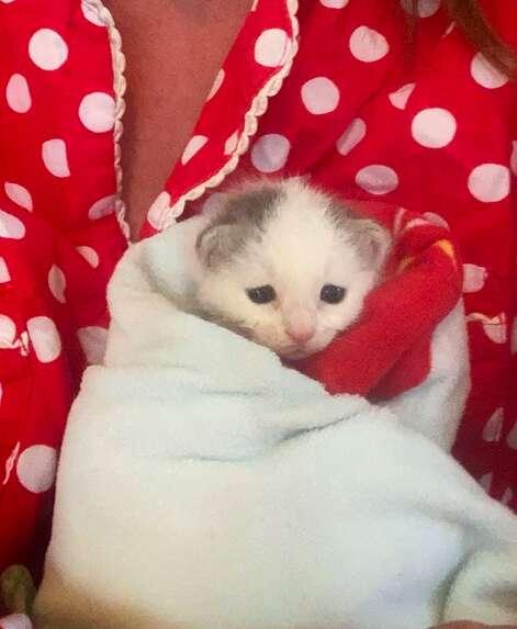 Polly the newborn kitten found in a log