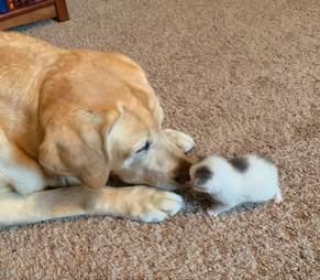 Kitten snuggles up to her senior dog friend