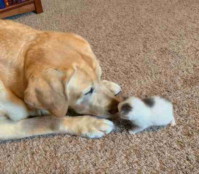 Kitten snuggles up to her senior dog friend