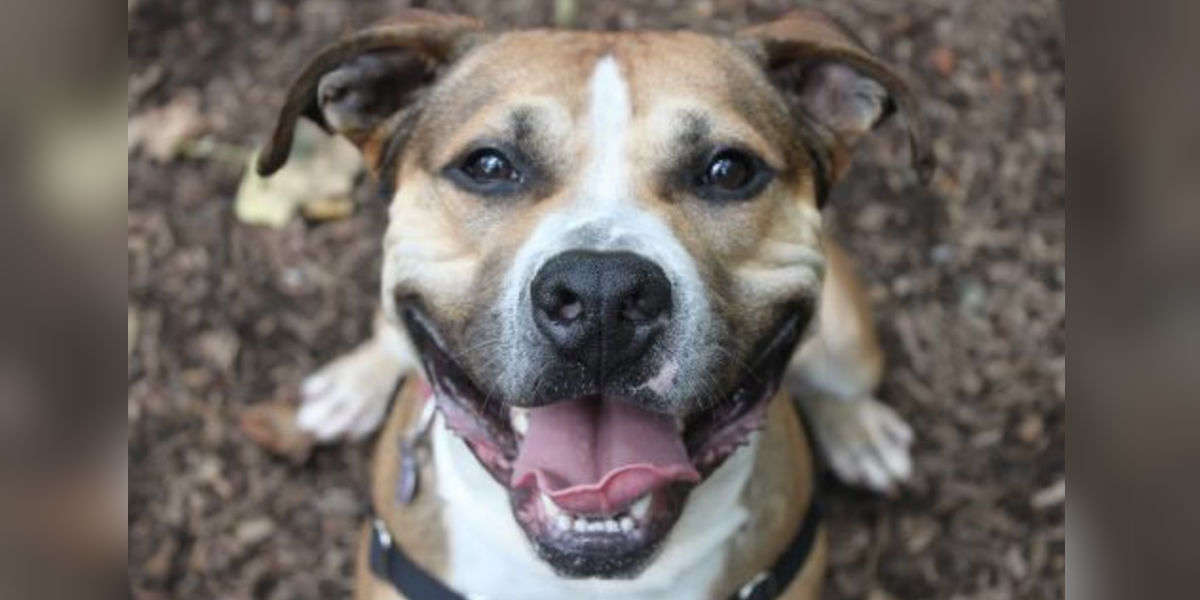 Playful Senior Dog Has Been Waiting In The Shelter For 9 Years