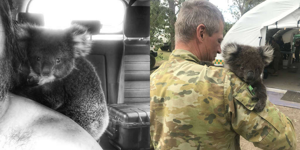 Koala Saved From Wildfires Won't Stop Snuggling His Rescuers