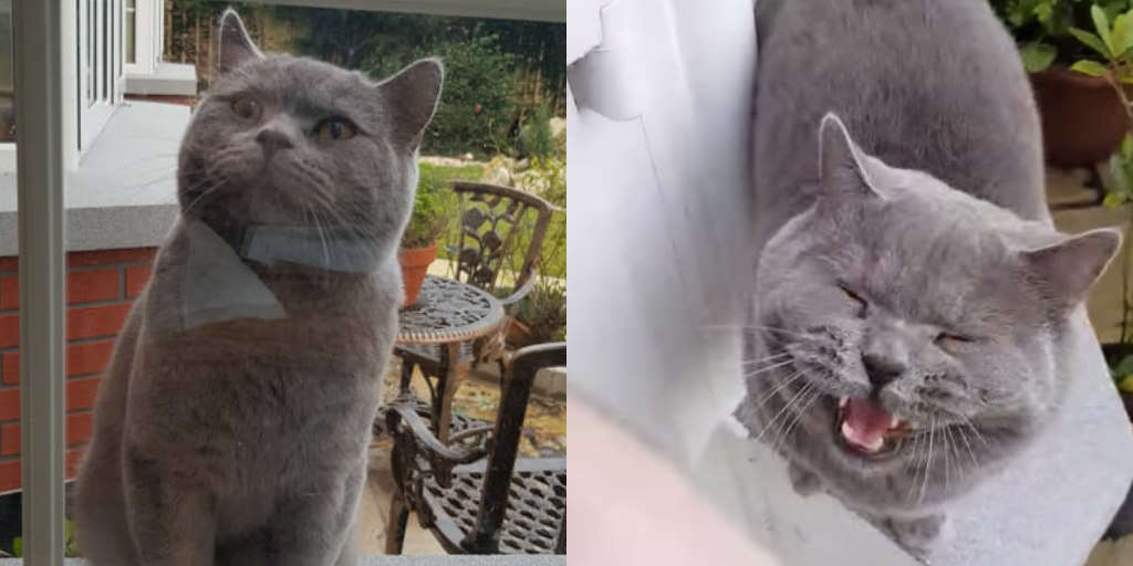 Cat Isn't Happy When His 'Girlfriend' Won't Come Out To Play