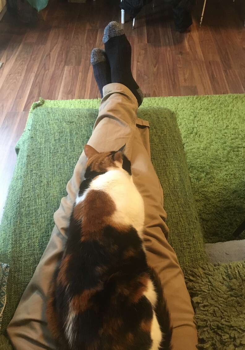 A clingy cat named Ziggy sits on her dad's lap