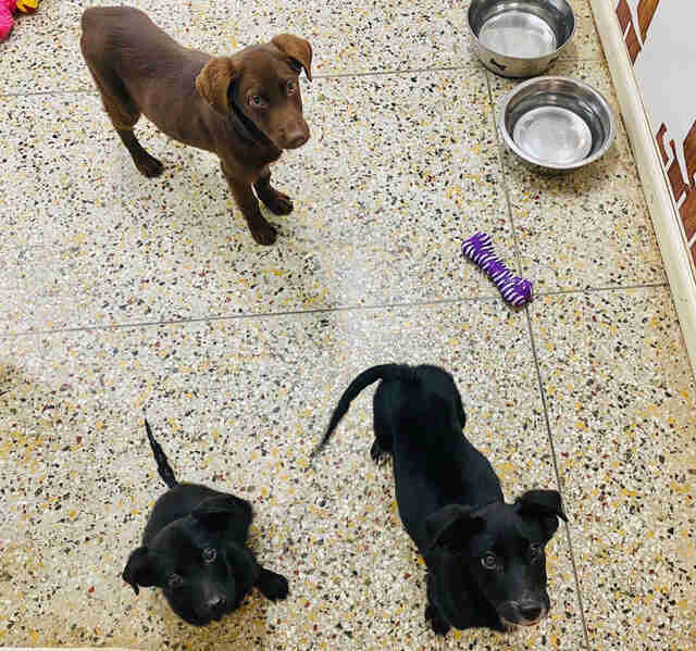 Burreaux and his siblings at an animal shelter