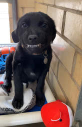 Shelter puppy smiles