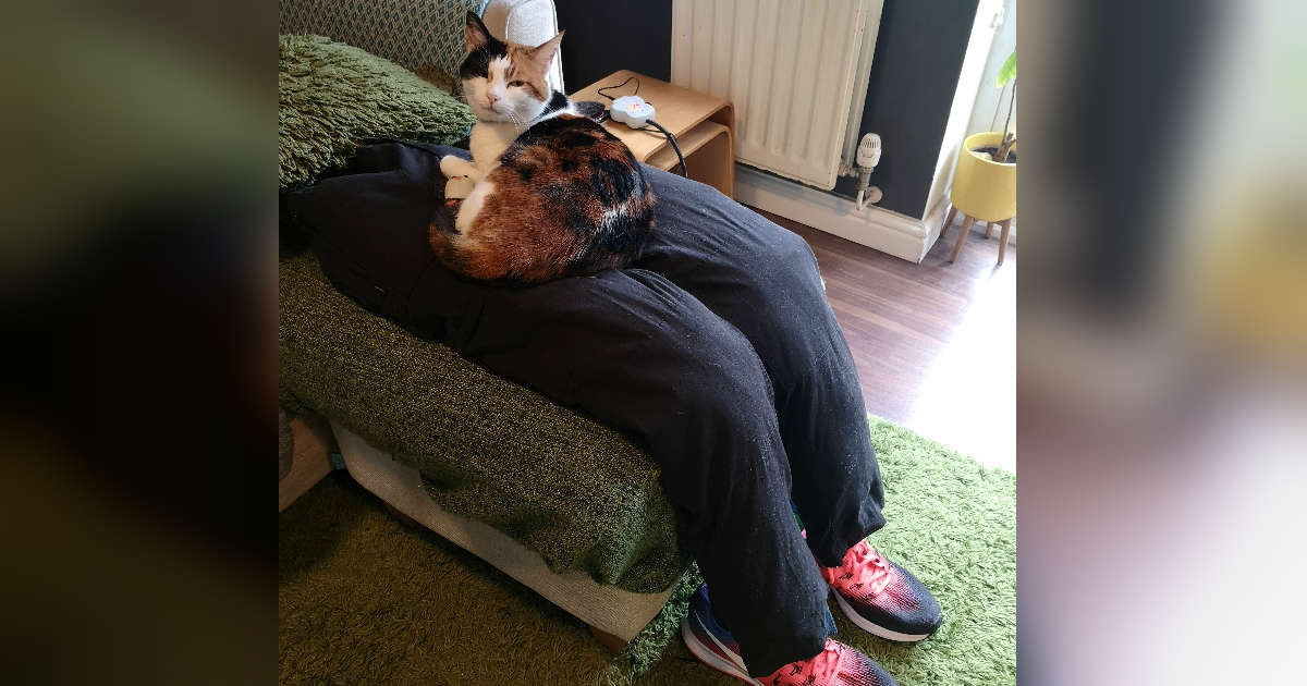 "Couple Comforts Their Super Clingy Cat With A Fake ""Lap"""