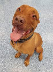 Deisel still looking for a home after every other dog was adopted