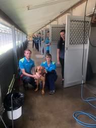 Last dog left in RSPCA NSW shelter
