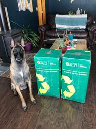 Dog gets 400 tennis balls for his birthday