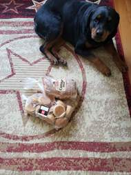 Jakey the dog hides and protects the bread