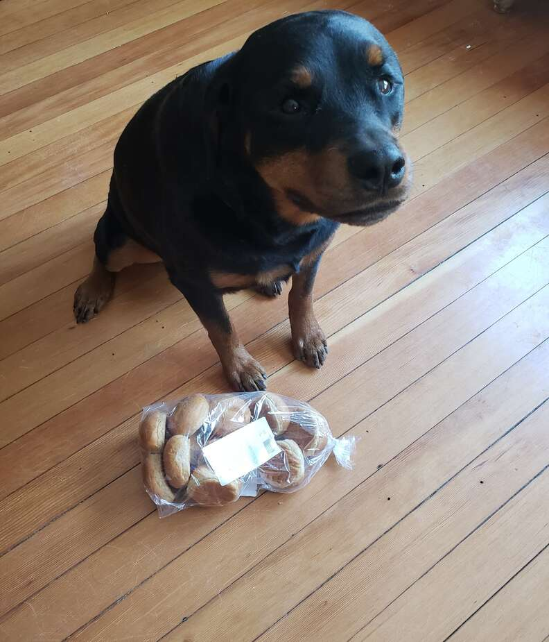 Rottweiler protects bread while mom's away