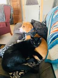 Jasper and Bo snuggle together