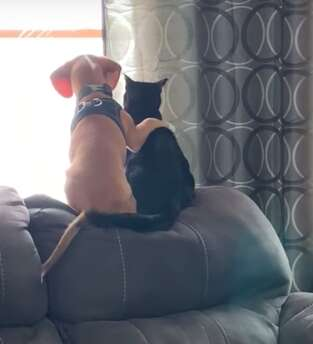 Dog puts his arm around cat friend