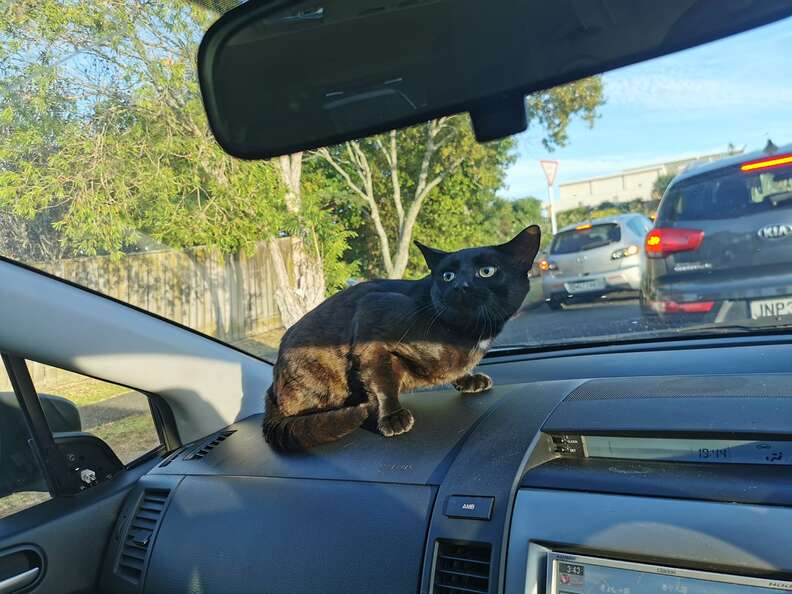 cat sneaks into car