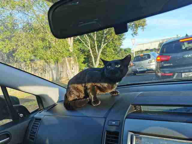 cat sneaks into car