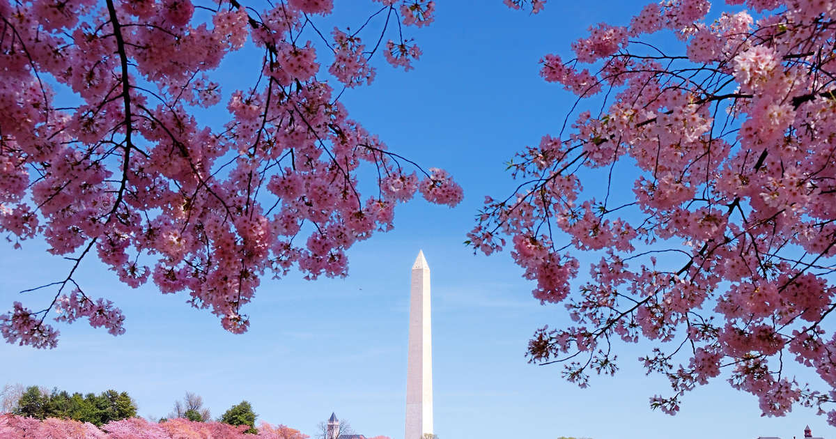 Cherry Blossom Festival Dc 2020 When To Expect Peak Bloom This
