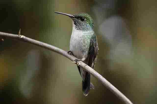 Petit colibri intelligent construit une maison avec un toit