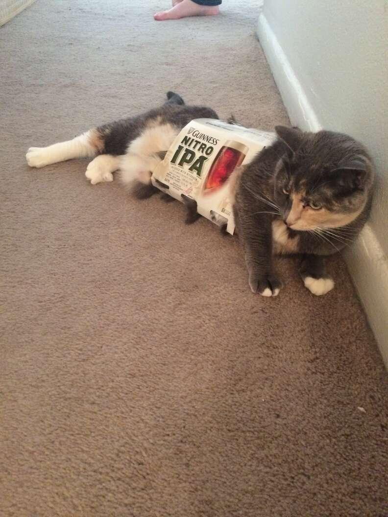 cat automatic feeder