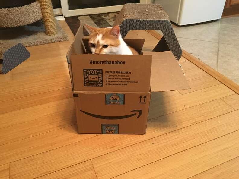 Cat hides in cardboard box