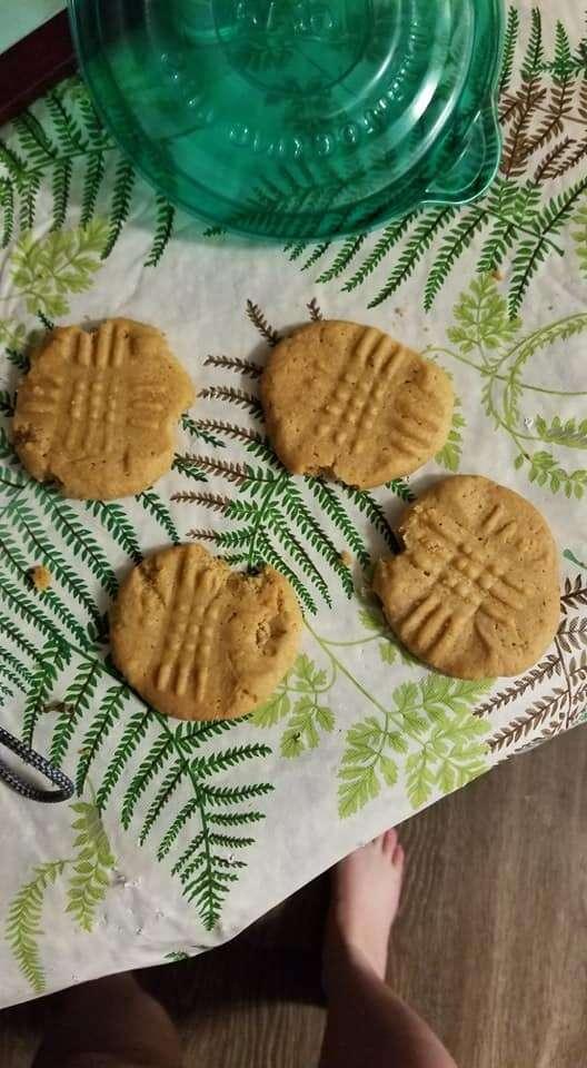 cat eats cookies