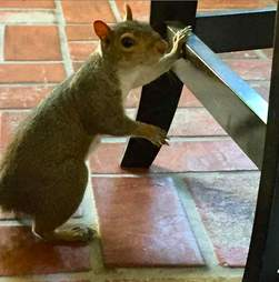 Squirrel visits woman everyday