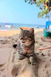 cat goes to the beach
