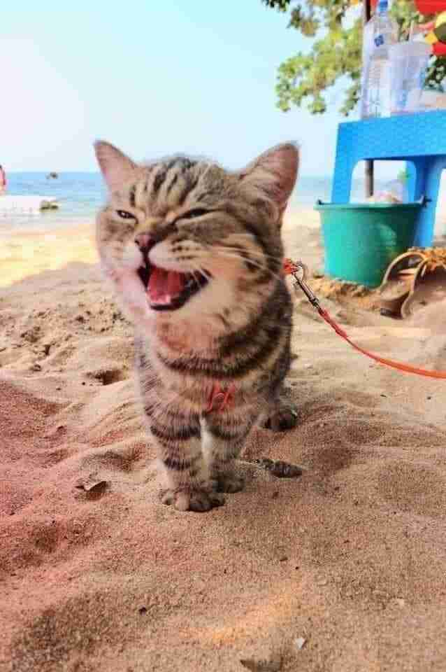 Cat Goes To The Beach For First