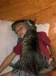 cat hugs boy