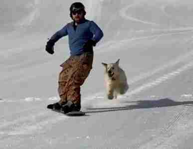 Dog runs after guy while he snowboards