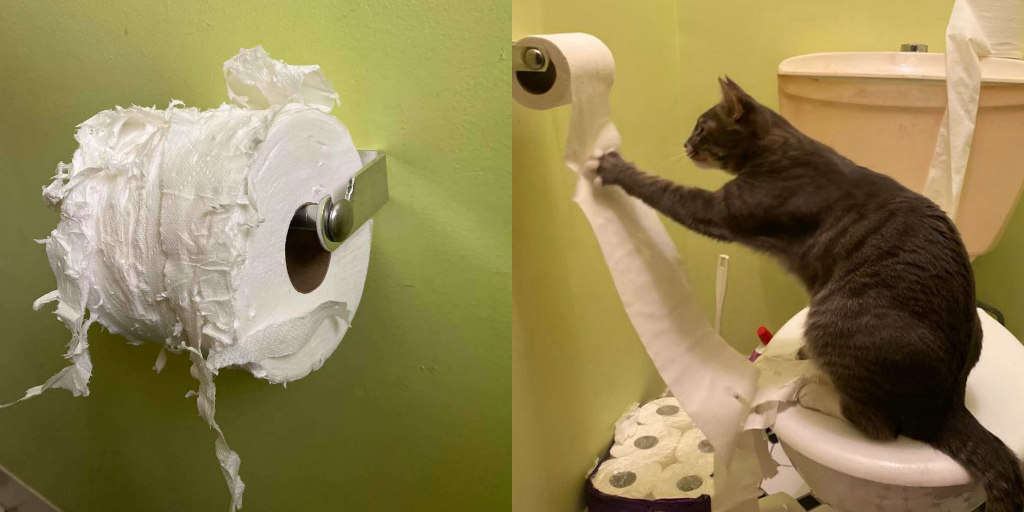 Sneaky Cat Promptly Destroys Her Mom's Toilet Paper Stash