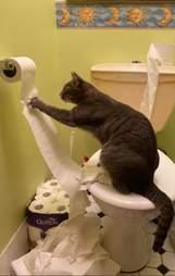cat destroys toilet paper