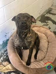 Shelter dog gets his first bed